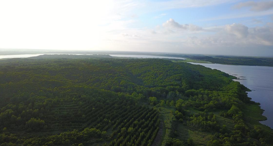 緑化・生物多様性への取り組みメイン背景