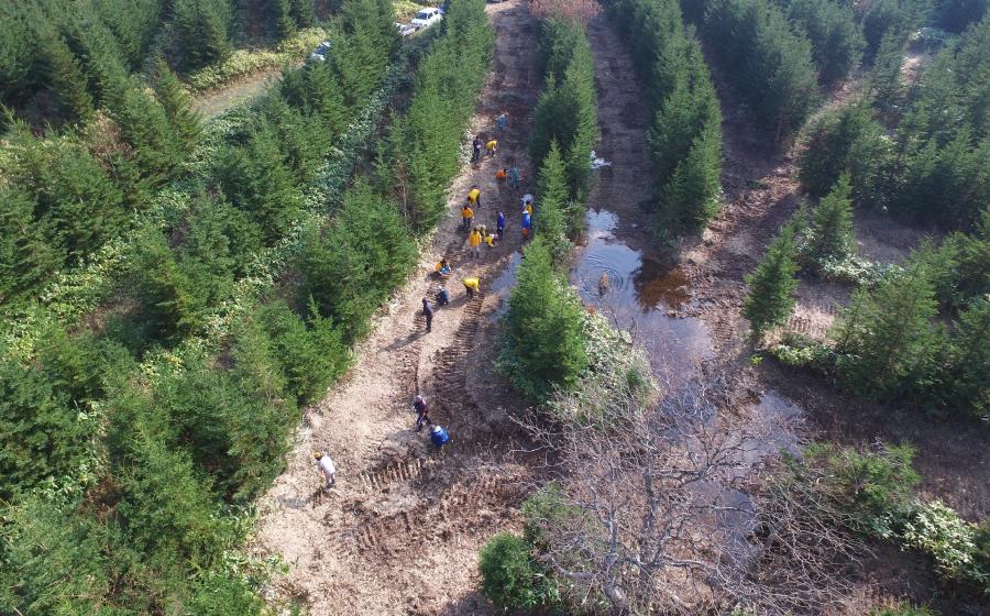 森の保全・再生活動