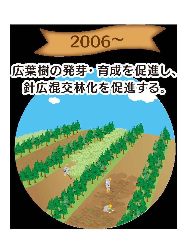 2006〜 広葉樹の発芽・育成を促進し、針広混交林化を促進する。
